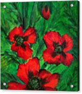 3 Red Poppies Acrylic Print