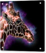Reticulated Giraffe, Samburu, Kenya Acrylic Print