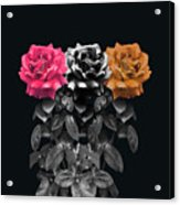 3 Roses Acrylic Print