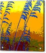Sea Oats Acrylic Print