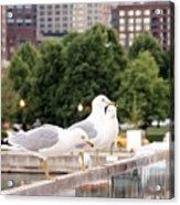 3 Seagulls In A Row Acrylic Print
