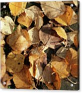 Silver Birch Leaves Lying On A Brick Path In A Cheshire Garden On An Autumn Day   England Acrylic Print