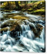 Spring Along Anthony Creek Acrylic Print