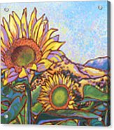 3 Sunflowers Acrylic Print by Nadi Spencer