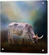 Texas Longhorn Steer Acrylic Print