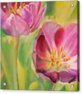 Tulipes Acrylic Print