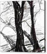 Two Tree Acrylic Print