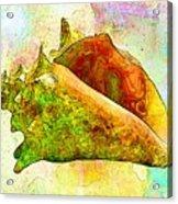 Underwater. Sea Shells Acrylic Print