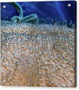 Vichy Springs Carbonated Hot Springs Acrylic Print