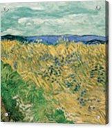Wheat Field With Cornflowers Acrylic Print