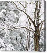 Winter In Monongahela National Forest Acrylic Print