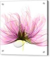 X-ray Of Peony Flower Acrylic Print