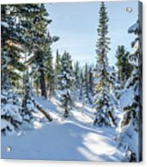 Amazing Landscape With Frozen Snow-covered Trees In Winter Morning  Acrylic Print