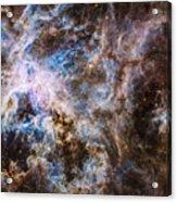 30 Doradus - Tarantula Nebula 8  Acrylic Print