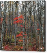 Great Smoky Mountains National Park Acrylic Print