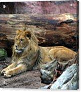 Hannover Zoo Germany Acrylic Print