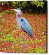 33- Magic Garden Acrylic Print