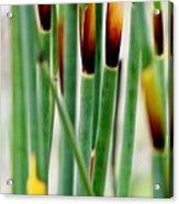 Bamboo Grass Acrylic Print