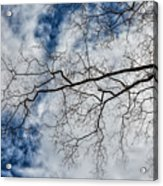 Trees Sky And Clouds Acrylic Print