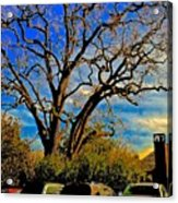 365 012716 Ancient Valley Oak And Parking Acrylic Print