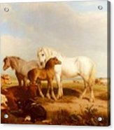 Willis Henry Brittan Horses And Cattle On The Shore Henry Brittan Willis Acrylic Print