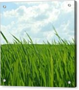 38744 Nature Grass Acrylic Print