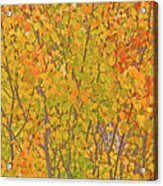 3983 Autumn Pleasure Acrylic Print