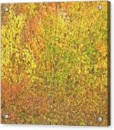 3991 Autumn Profusion Acrylic Print