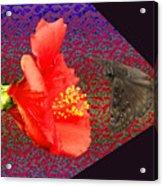 3d Butterfly Acrylic Print
