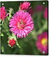 3d Flower Acrylic Print