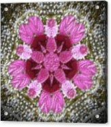 3d Pink Purple Mandala Painting Acrylic Print