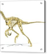 3d Rendering Of A Velociraptor Dinosaur Acrylic Print