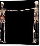 3d Rendering Of Human Skeleton Acrylic Print