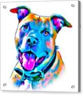 Art Dogportrait Acrylic Print