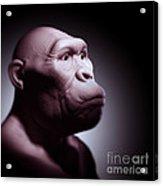 Australopithecus Acrylic Print
