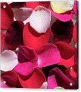 Back Lit Flower Petals 1 Acrylic Print