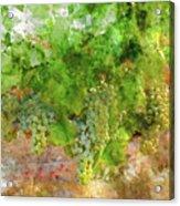 Chardonnay Grapes Close Up Acrylic Print