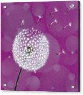 Dandelion Flying Acrylic Print