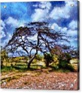 Desertic Tree Acrylic Print