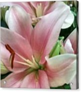 Flower Collection Acrylic Print