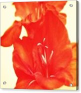 Gladiola Acrylic Print by Cathie Tyler
