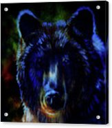 head of mighty brown bear, oil painting on canvas and graphic collage. Eye contact. Acrylic Print