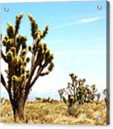 Joshua Tree Desert Acrylic Print