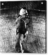 Lion Tamer, 1930s Acrylic Print