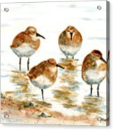 4 Little Pipers Acrylic Print