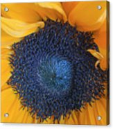 Macro Shot Of Flower Acrylic Print
