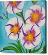 4 Morning Glories Flowers  Acrylic Print