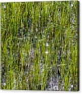 Nature Scenes Around Hunting Island South Carolina Acrylic Print