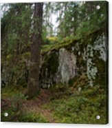 Old Forest In Kauppi Tampere Acrylic Print