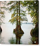 Reelfoot Lake Acrylic Print